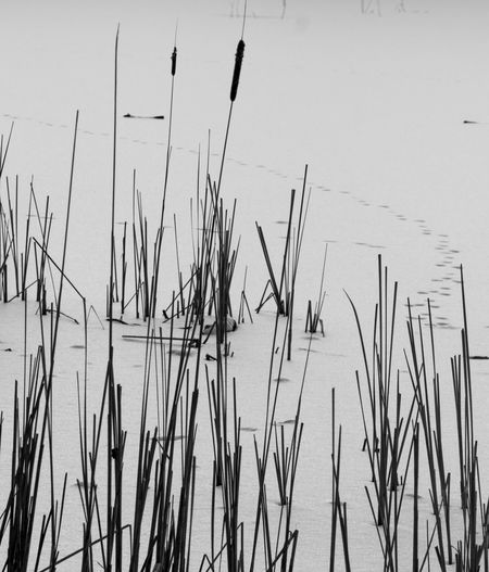 High angle view of stalks in lake against sky