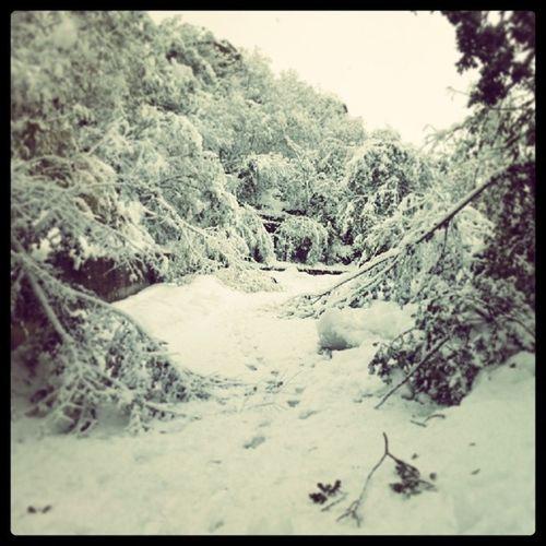 Ontheroad . Snow Winter Road white nature landscape picoftheday photooftheday IgersItalia IgersAbruzzo