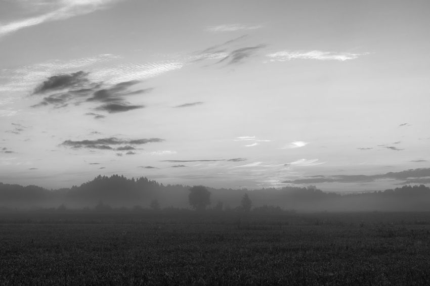 Misty morning - Agriculture Beauty In Nature Black And White Cloud - Sky Day Field Fog Grass Growth Hazy  Idyllic Landscape Mist Misty Morning Monochrome Nature No People Outdoors Rural Scene Scenics Sky Tranquil Scene Tranquility Tree