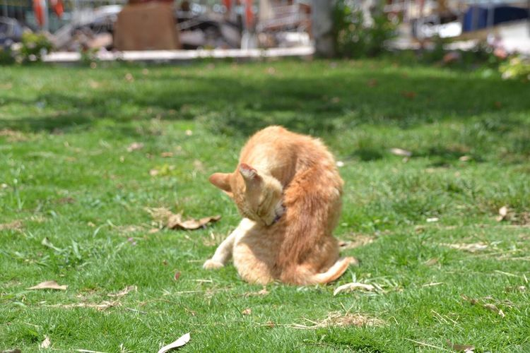 One Animal Domestic Cat Domestic Animals Nature Ginger Cat