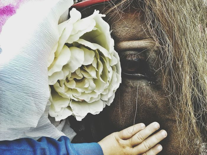 View of toddler touching horse