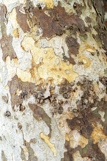 Abstract image of patchy tree bark Backgrounds Full Frame Textured  Pattern Rough Close-up No People Day Built Structure Outdoors Nature Abstract Textured  Tree Bark Rough Surface Patchy Colors Colour Patchwork Tree Trunk Trunk Weathered Peeling Off Plant Bark