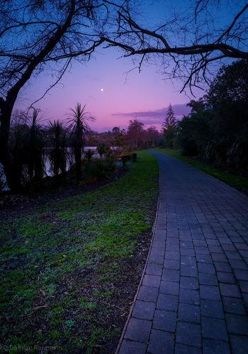 pathways at dusk Hamilton Hamiltonnz Waikato New_zealand_imagery Newzealandtravel Newzealand Northisland Purenewzealand Destinationnz NZ Hamiltonwaikato Sunset Waikato River Dusk Tree Astronomy Star - Space Sky Landscape Evening Calm