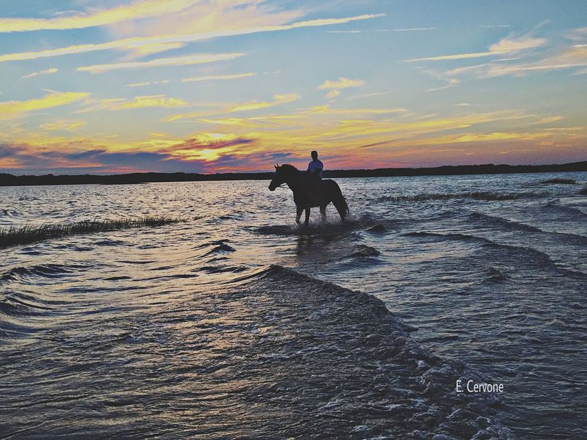 It was a surprise that came out of nowhere sSea sSky wWater bBeauty In Nature sSunset SSilhouette hHorse lLeisure Activity pPets hHorizon Over Water bBeach Finding New Frontiers