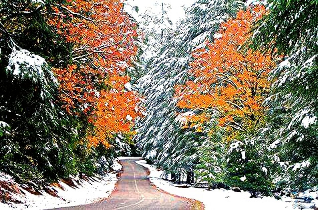 tree, nature, autumn, the way forward, beauty in nature, outdoors, day, growth, scenics, tranquil scene, change, road, tranquility, leaf, no people, snow, forest