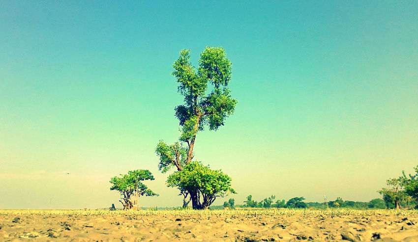Beauty In Nature Blue Clear Sky Day Green Growth Horizon Over Land Landscape Nature Non Urban Scene Outdoors Plant Sky Tree