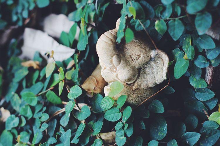 Close-up of mushrooms