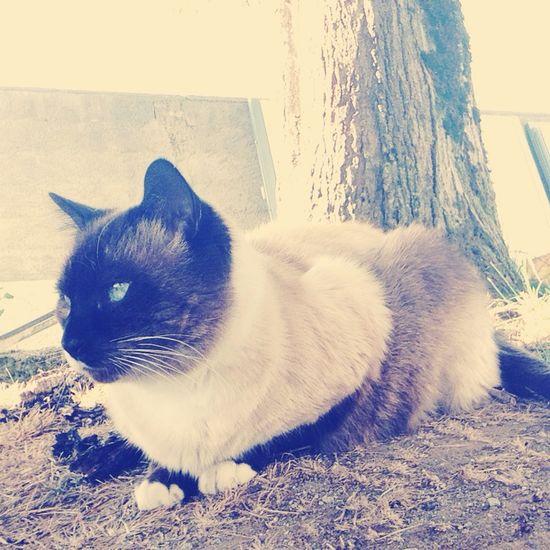 My love, My cat 💕 Cat Love