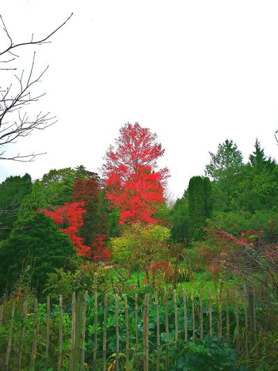 Growth Tree Cloud - Sky Red Sky No People Nature Outdoors Beauty In Nature Day Flower Tall Colourful Tree Autumn Colours Wooded Hillside Forest Red Nature Growth Tree