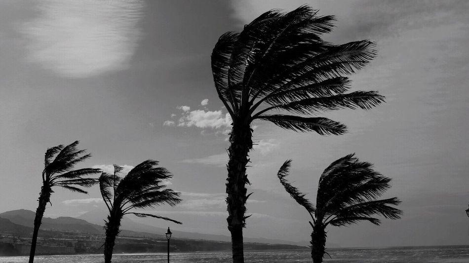 Outdoors Palm Tree Sky Nature Tree No People Beauty In Nature EyeEm Best Shots EyeEmBestPics EyeEm Nature Lover Shootermag Islas Canarias Fujixpro2 Canary Islands Streetphotography Blackandwhite Bajamar, Tenerife Bajamar