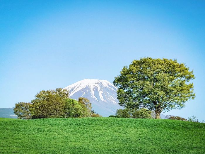 Japan Trees Japan Photography Mountain  富士山 Plant Sky Tree Green Color Beauty In Nature Growth Nature Clear Sky No People Blue Land Field Outdoors