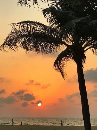 Great Sunset at Negombo Beach Austrianblogger Austrianphotographers Beach Beauty In Nature Dailyphoto EyeEm Best Edits EyeEm Best Shots EyeEm Best Shots - Nature EyeEm Gallery EyeEm Nature Lover EyeEmBestPics Iphone7 IPhoneography Iphonesia Nature Nature Photography Naturelovers Negombo Negombobeach Palm Tree Silhouette Sri Lanka Sri Lanka Travel Sunset Tranquility