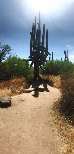Cactus in park against sky
