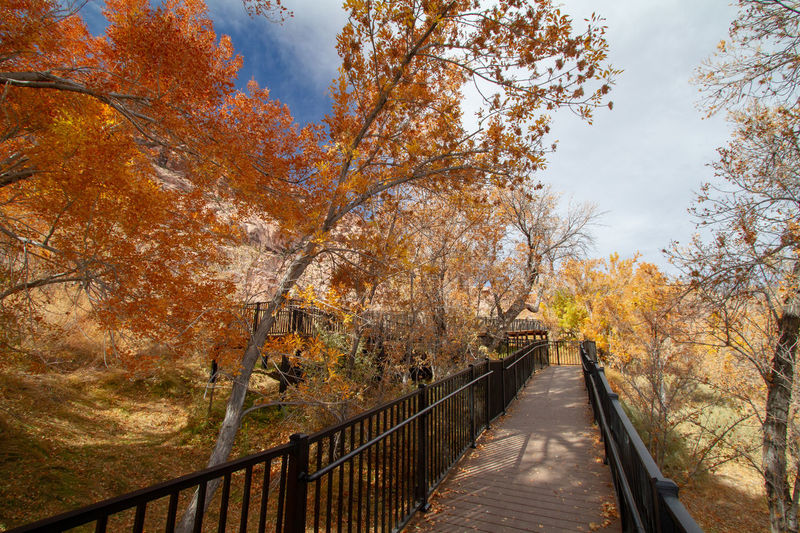 Footbridge amidst trees against sky during autumn. red rock canyon, nevada