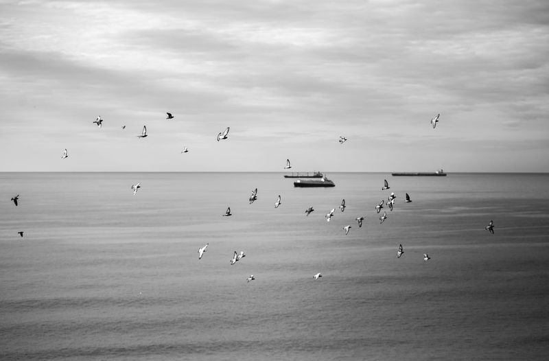 Water Sea Sky Flying Cloud - Sky Horizon Over Water Horizon Nature Vertebrate Beauty In Nature Animal Themes Animal Beach Bird Land Animal Wildlife Flock Of Birds Blackandwhite Black And White Black & White Pigeon Group Of Animals Large Group Of Animals Animals In The Wild