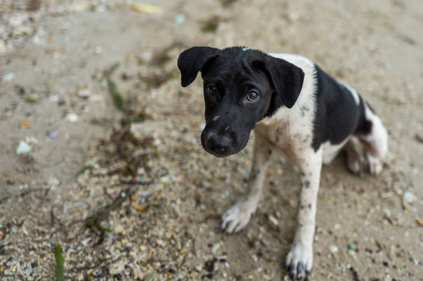 Labuan Bajo dog Black Color Canine Day Dog Domestic Domestic Animals Focus On Foreground Land Looking At Camera Mammal No People One Animal Pets Portrait Puppy Vertebrate Young Animal