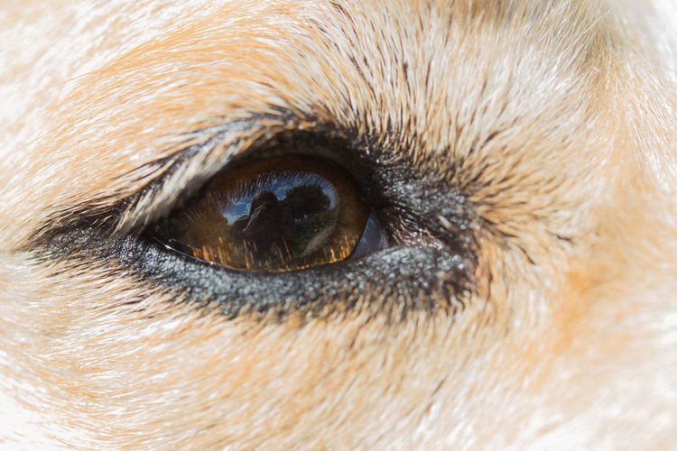 The city and world...through her eyes Labrador Stories From The City Animal Themes Canine Close-up Day Dog Dog Eye Dogs Eye Domestic Animals Eyeball Eyeballs  Eyelash Eyesight Iris - Eye Looking At Camera Mammal One Animal Outdoors People Pets Portrait Through Their Eyes