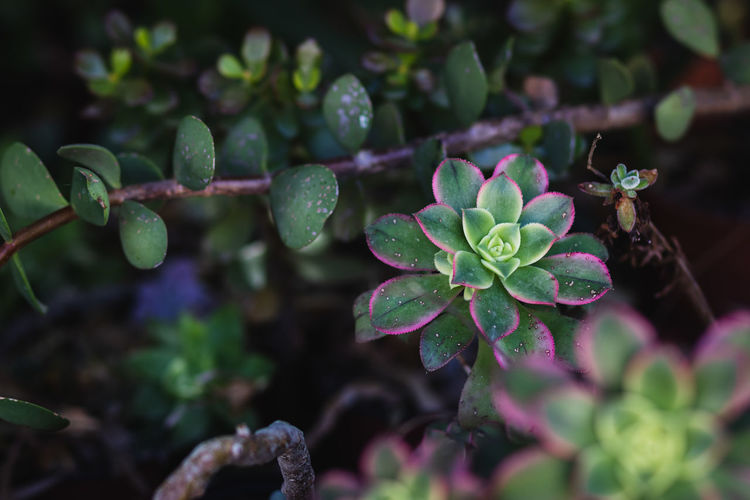 High angle view of water drops on plant