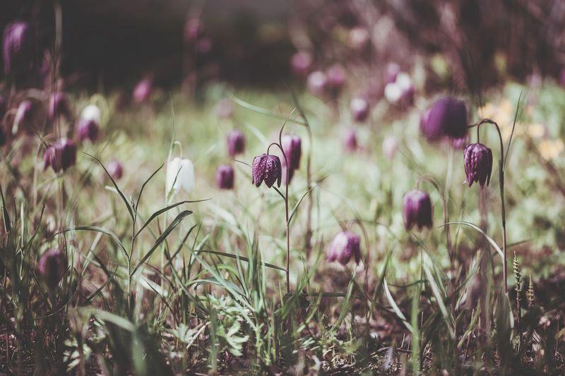 ©️878 meadow.