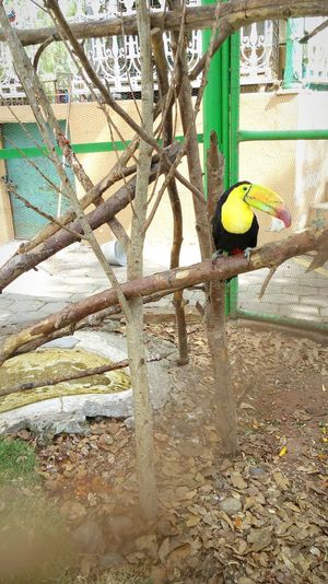 Tucan Nature Hidalgo, México Zoo EyeEm Nature Lover