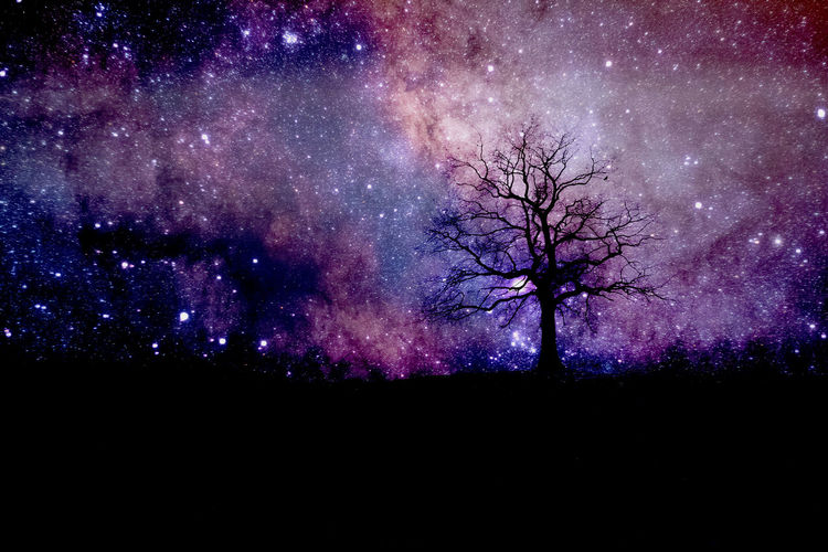 Night Tree Beauty In Nature Sky Star - Space Space Purple Silhouette Scenics - Nature No People Nature Astronomy Plant Tranquility Bare Tree Tranquil Scene Outdoors Galaxy Idyllic Landscape Dark