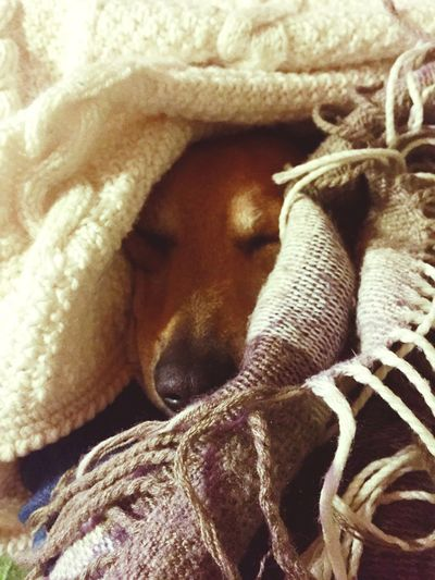 Part of My life. Dog Dogslife Puppy Warm Life Home Relaxing Beauty Blanket