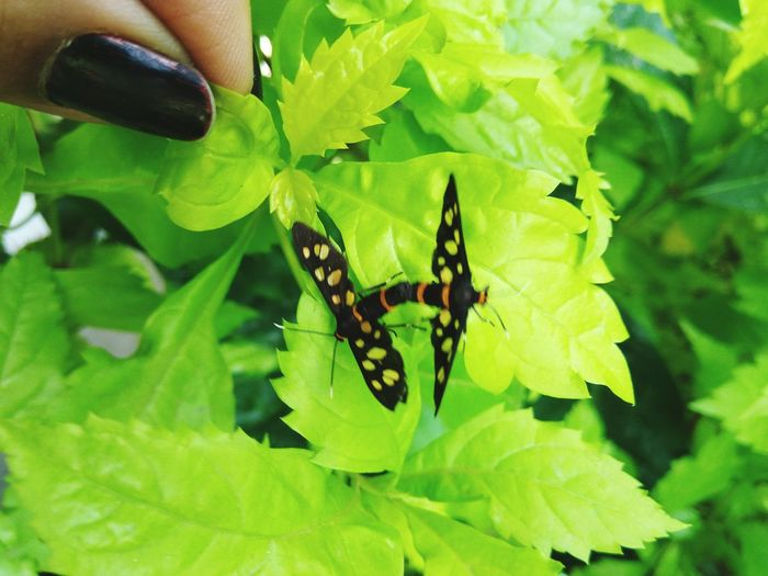 They can't see how beautiful they are.. but you can. Insect Green Color Leaf Nature Plant Butterfly - Insect Outdoors Beauty In Nature No People Day Close-up Animal Themes Animals In The Wild One Animal Animal Wildlife