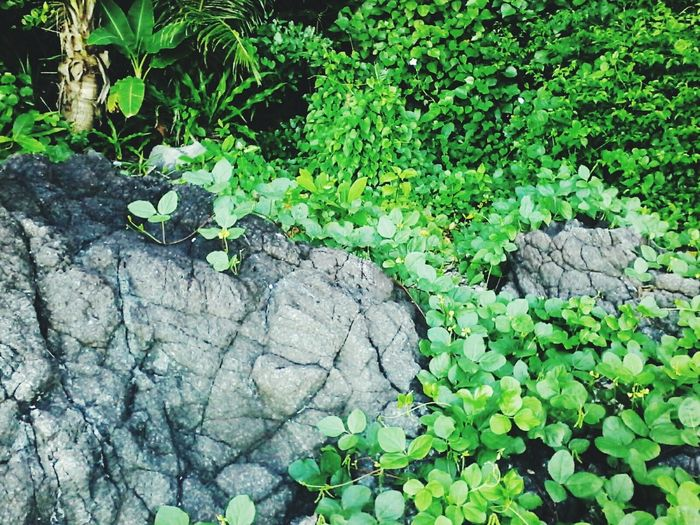 🌿 Go green! Outdoors Day Green Color Nature No People Growth Plant Leaf Close-up Earth Day 2k17 EyeEm Nature Lover Freshness Tranquility Plant Part Tropical Climate