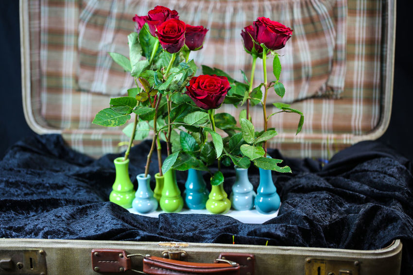 Old Suitcase Flower Plant Flowering Plant Freshness Close-up No People Red Nature Beauty In Nature Vulnerability  Fragility Window Indoors  Green Color Glass - Material Food Leaf Rosé Growth Day Flower Head Flower Arrangement