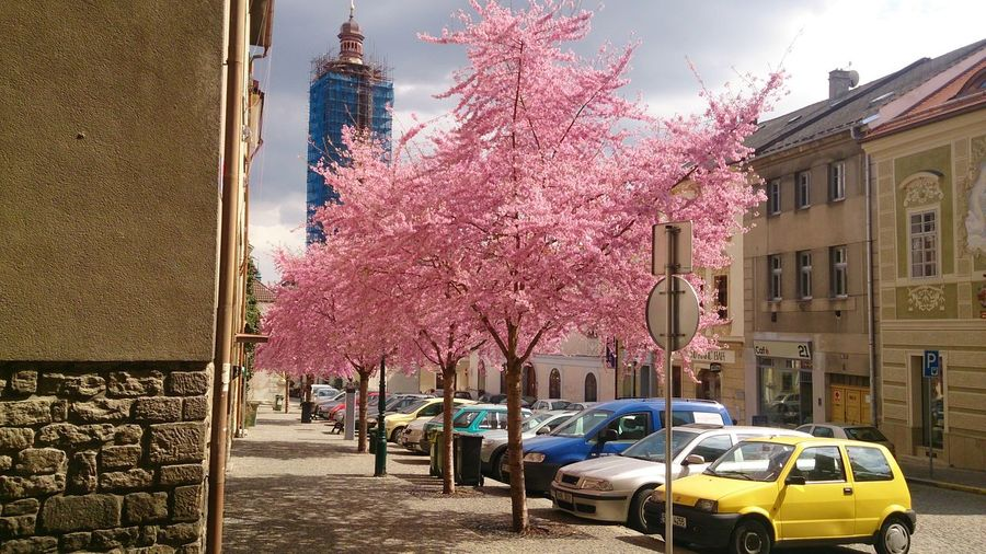 Sakura ;) Kutna Hora Spring St.Jakob