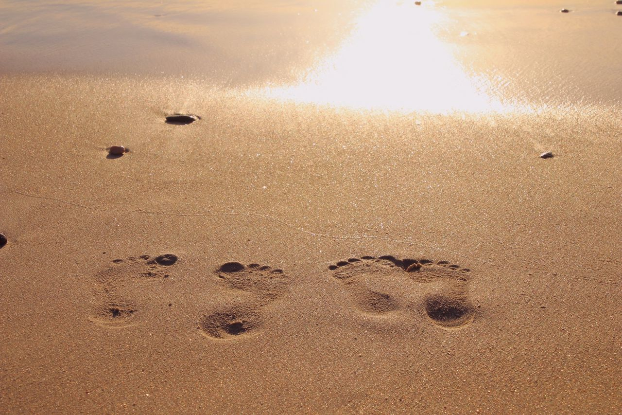 paw print, animal track, footprint, sand, beach, no people, nature, high angle view, outdoors, day, close-up