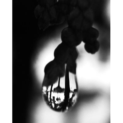 Same shot edited with Snapseed. #bw #bnw #bw_lover #bw_crew #ic_bw#insta_pic_bw #monoart #most_deserving_bw #insta_crew #irox_bw #macro #all_shots Infamous_family Royalsnappingartists Macro Bwfever Bw Most_deserving_bw Bnw Bnw_worldwide Monoart Bnw_life All_shots Insta_pic_bw Bw_lover Rsa_macro Bws_worldwide Ig_artistry Gang_family Mdbw Bwstyles_gf Only_grayscale Insta_crew Rsa_bw Most_deserving Bwstyles_gf_water Irox_bw Md_weekly_droplets Bw_crew Md_macro Ic_bw Dropsalicious