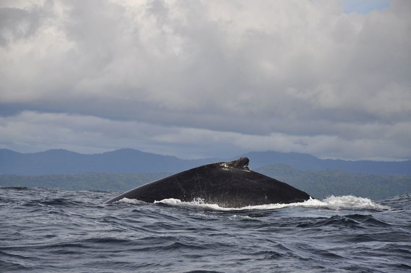 Colombia Nuquí