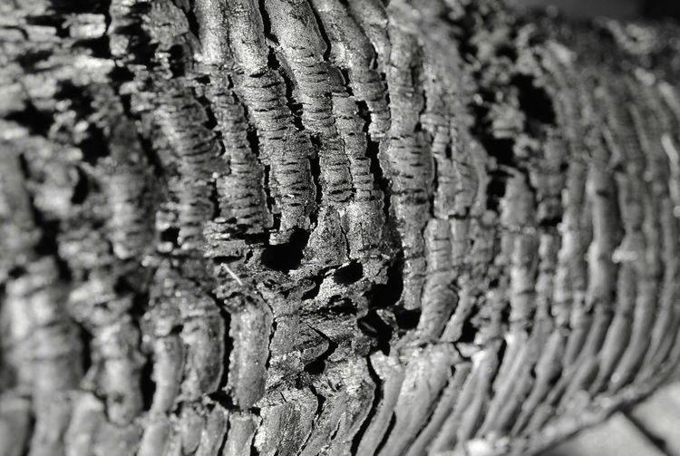 Charred Wood Trunk Texture Coal Charred Charred Wood Close-up Textured  No People Selective Focus Pattern Full Frame Natural Pattern Tree Trunk Trunk Backgrounds Rough