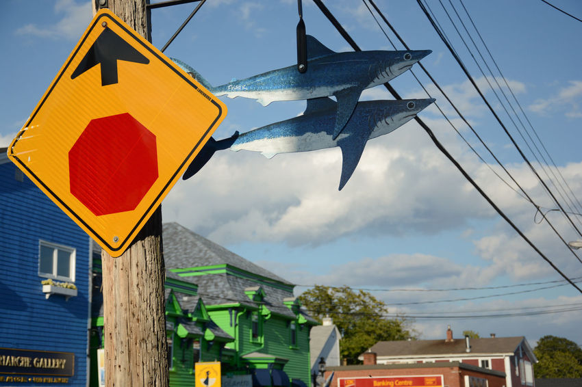 Colorful chaos City Street The Week On EyeEm Travel Photography Traveling Wires In The Sky Low Angle View No People Nova Scotia Outdoors Primary Colors Road Sign Sharks