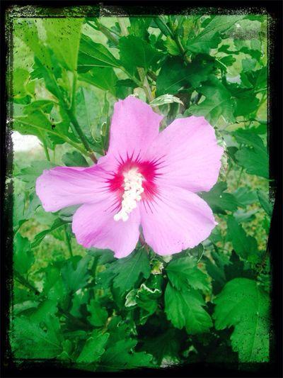 Nature flower in my garden