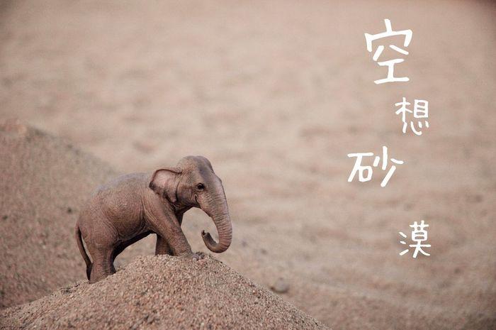 空想砂漠 Elephant 象 空想 砂漠 Animal 動物