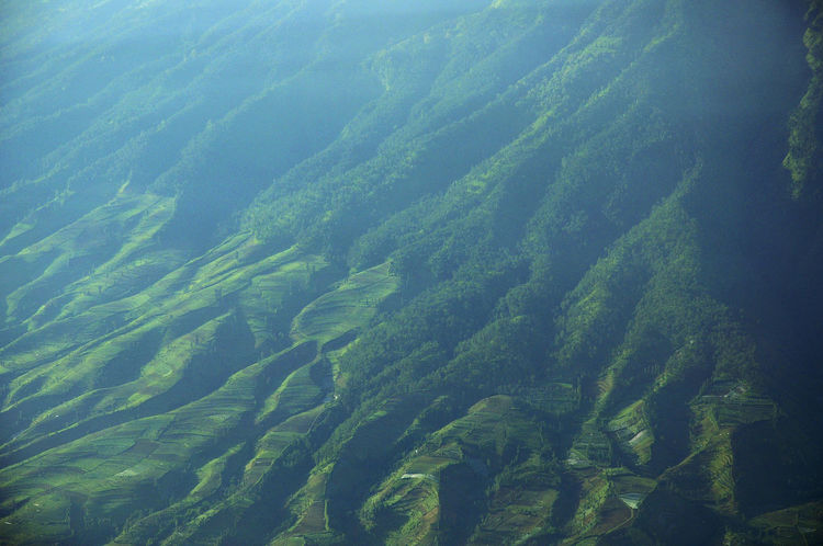 root the mountain Aerial View Agriculture Beauty In Nature Central Java Day Forest High Angle View Landscape Mountain Nature No People Outdoors Rural Scene Scenics Tranquil Scene Tranquility Travel Destinations View Into Land Water EyeEm Selects