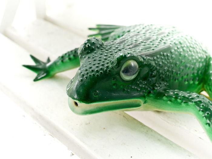Close-up Frog