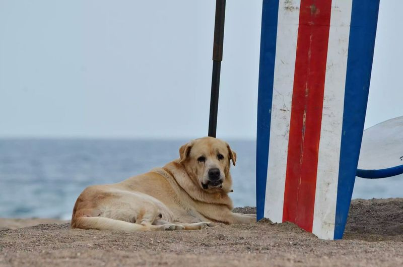 Portrait of dog relaxing on shore