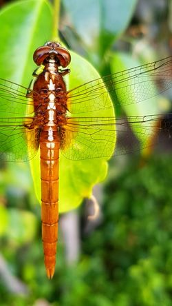 Insect Leaf Drop Agriculture Close-up Animal Themes Dragonfly Animal Wing