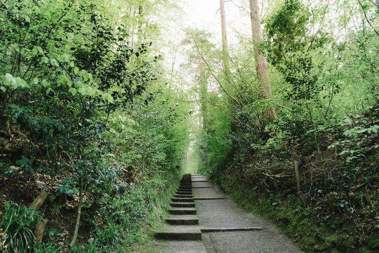 Beauty In Nature Day Foliage Forest Green Green Color Growth Nature No People Outdoors Path Plant Sonian Forest Spring The Way Forward Tranquil Scene Tranquility Tree