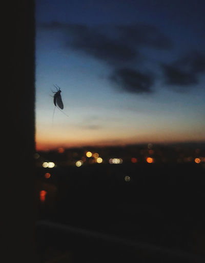 Silhouette of insect against sunset sky