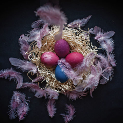 High angle view of easter eggs on textile with feather