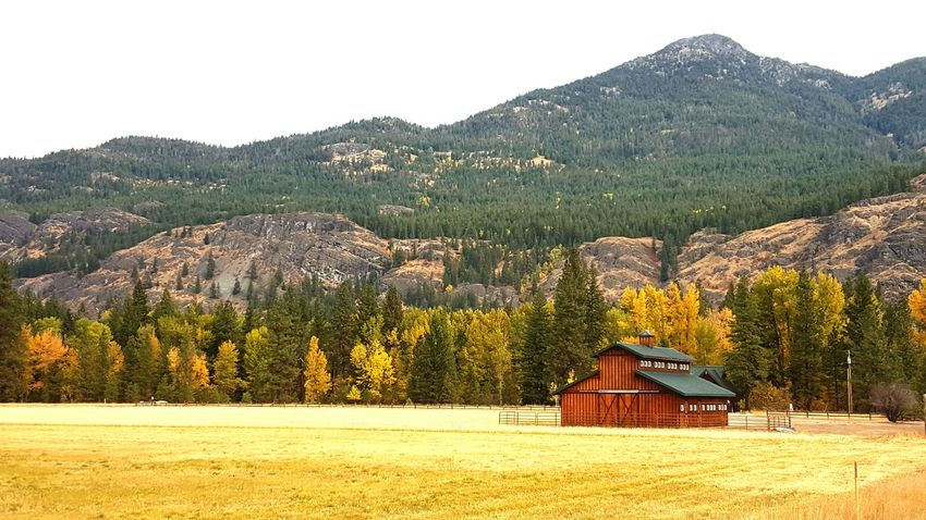 Rural Scene Landscape Agriculture No People Barn Peaceful Mountain Field Scenic Drive Washington Nature Rural Fall Fall Colors Autumn Golden Yellow