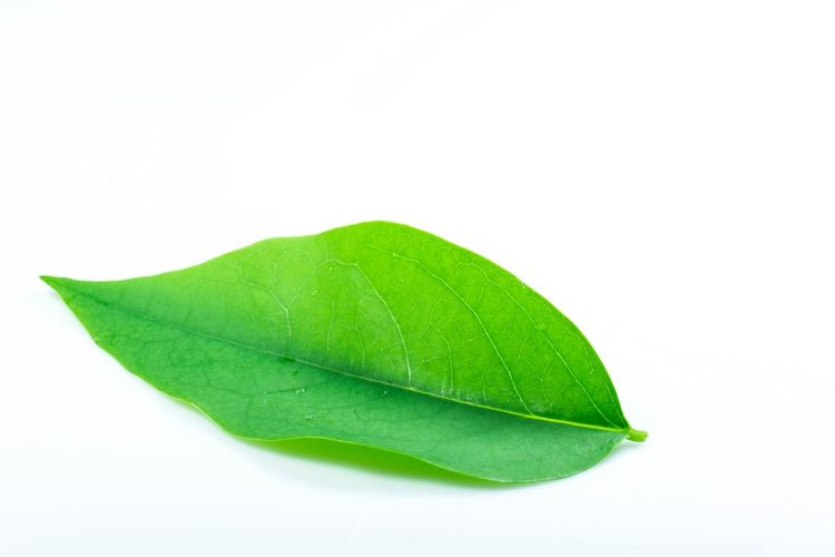 leaves on white background Isolated White Background Studio Shot Green Color Leaf Plant Part Cut Out Copy Space Close-up Leaf Vein Plant Still Life Freshness Nature Wet Natural Pattern Single Object