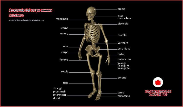 Body & Fitness Colonna Corpo Costole Costolette Falangi Fun Karate Lifestyles Orbit Orbita Orbital Ossa Perone Radio Scheletro Shodaishinkhan Skeleton Skulls And Bones Spina Teschio  Tibia