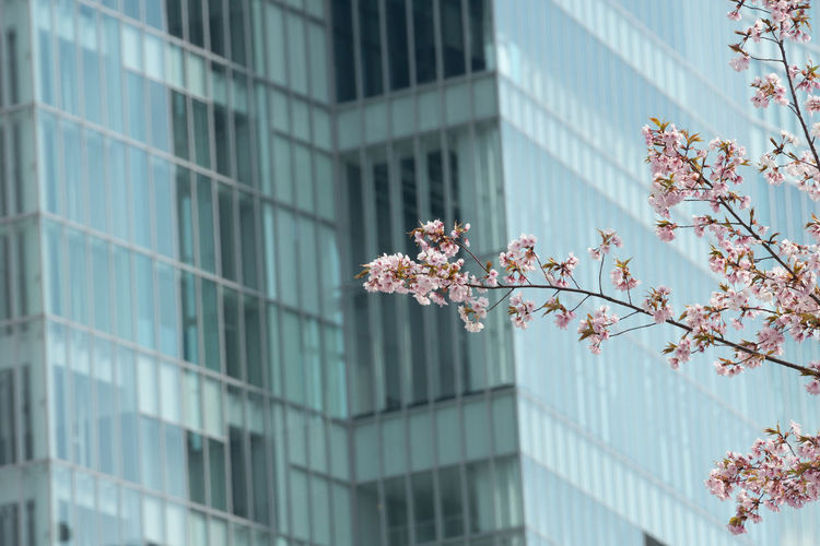 Low angle view of flowering tree against building