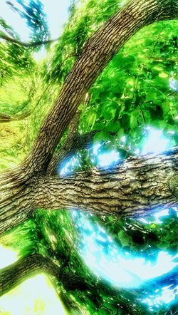 The Impurist Distortion Through My Eyes EyeEm Nature Lover TreePorn Sunlight And Shadow Reality_manipulation In My Mind's Eye From My Point Of View Hugging A Tree