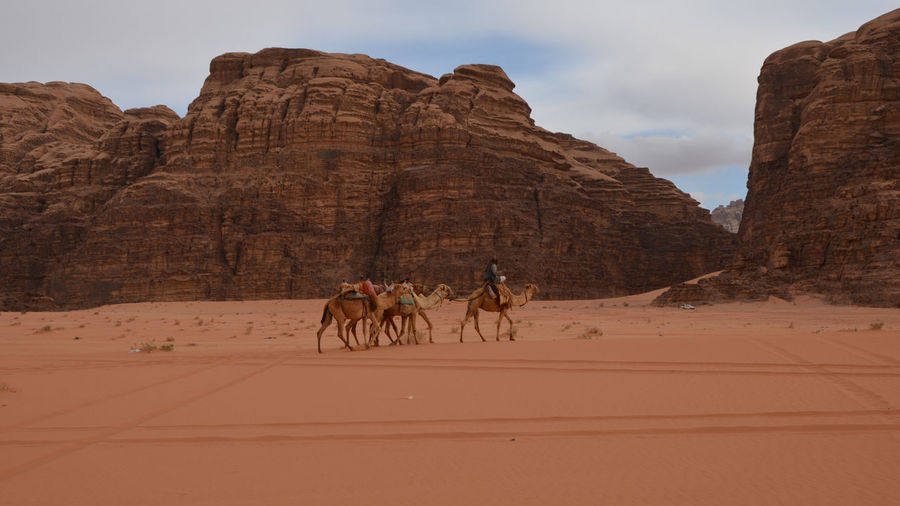 View of people riding horse in desert